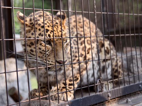旭山動物園で見たものは_d0355333_11050717.jpg