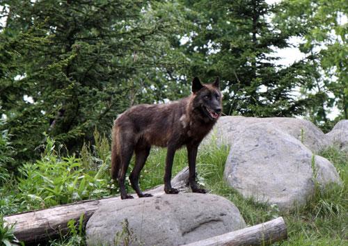 旭山動物園で見たものは_d0355333_11050740.jpg