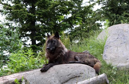 旭山動物園で見たものは_d0355333_11050755.jpg