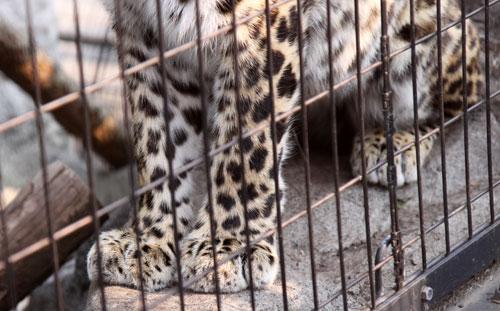 旭山動物園で見たものは_d0355333_11050769.jpg