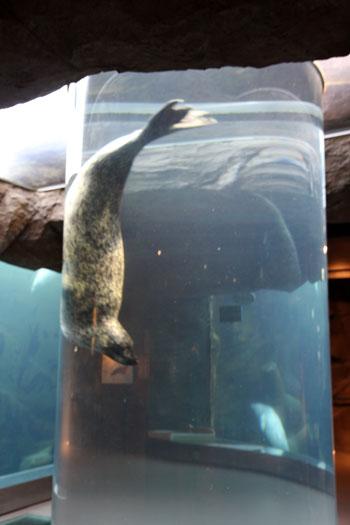 旭山動物園で見たものは_d0355333_11050795.jpg