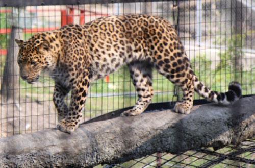 旭山動物園で見たものは_d0355333_11050799.jpg