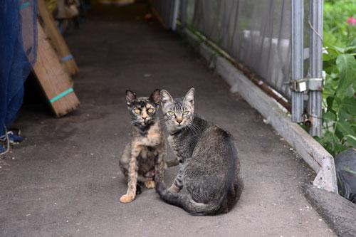 旭山動物園で見たものは_d0355333_11050892.jpg