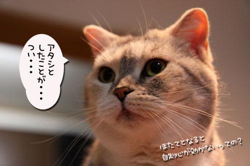 旭山動物園で見たものは_d0355333_11050959.jpg