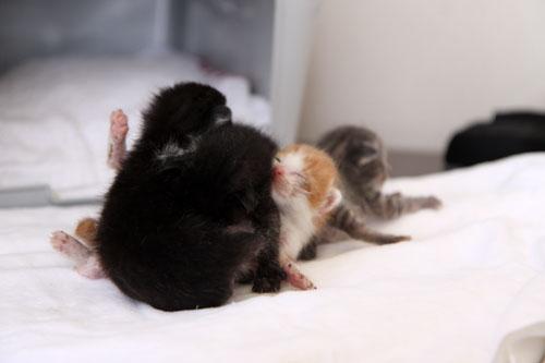 赤ちゃん猫たちの名前は_d0355333_11055333.jpg