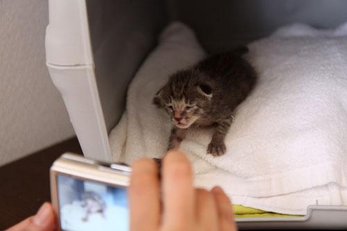 赤ちゃん猫たちの名前は_d0355333_11055342.jpg