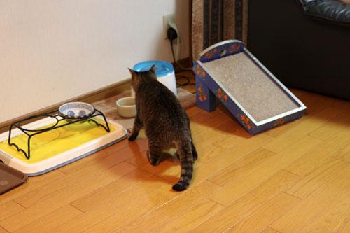 モップと闘う猫_d0355333_11064627.jpg