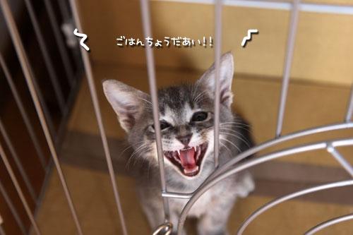 動画★おこめちゃんの朝ご飯_d0355333_11073042.jpg