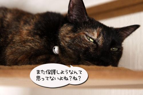 銀ちゃんのトイレは_d0355333_11075935.jpg