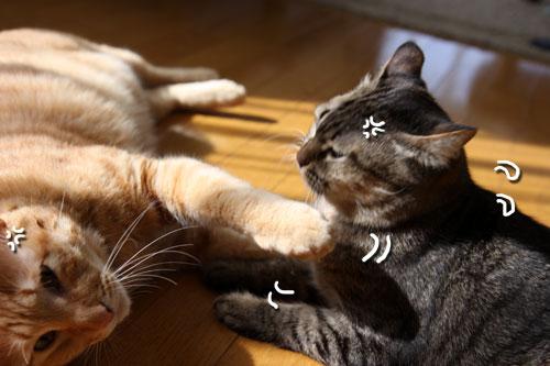 猫にしか出来ないこと。_d0355333_11080950.jpg