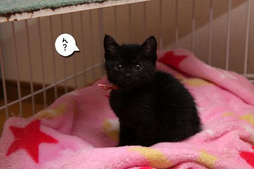 毛色考・さび猫の場合_d0355333_11083326.jpg