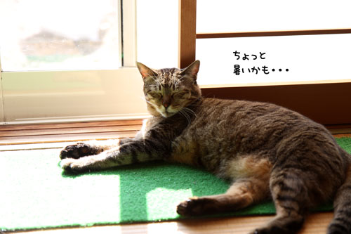 毛色考・さび猫の場合_d0355333_11083442.jpg