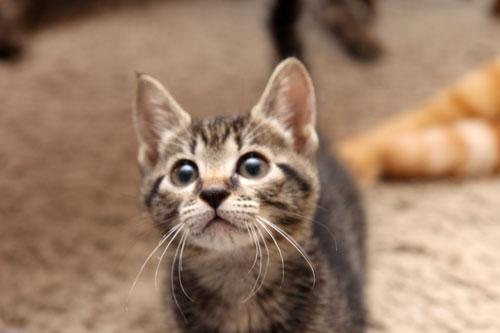 猫も食わぬ夫婦喧嘩。_d0355333_11091848.jpg