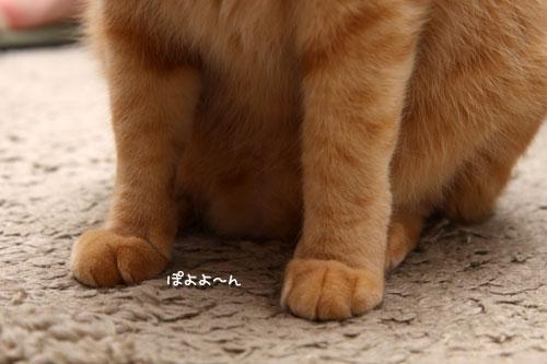 猫も食わぬ夫婦喧嘩。_d0355333_11091888.jpg
