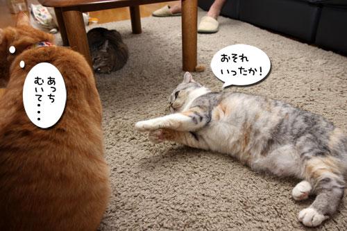 猫も食わぬ夫婦喧嘩。_d0355333_11091908.jpg