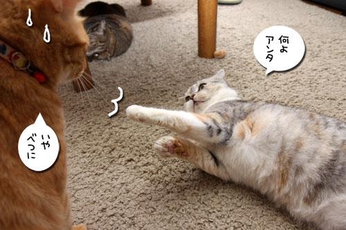 猫も食わぬ夫婦喧嘩。_d0355333_11091964.jpg