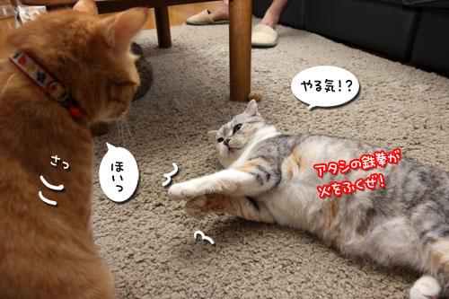 猫も食わぬ夫婦喧嘩。_d0355333_11091990.jpg