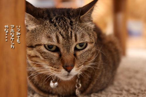 猫も食わぬ夫婦喧嘩。_d0355333_11091993.jpg