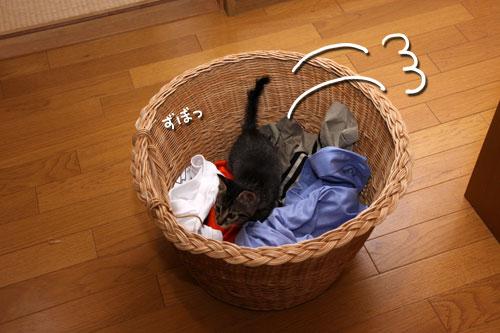 お洗濯応援隊結成!_d0355333_11092636.jpg