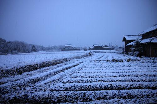 雪の朝_d0355333_12461099.jpg