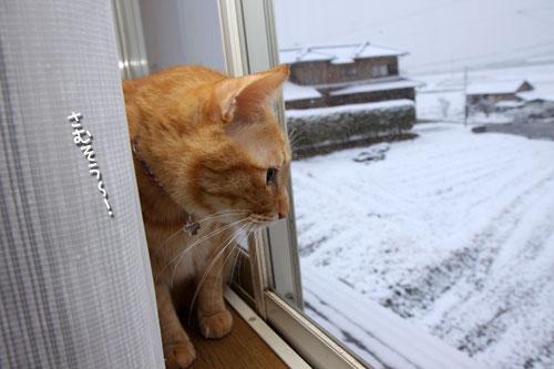 雪の朝_d0355333_12461126.jpg