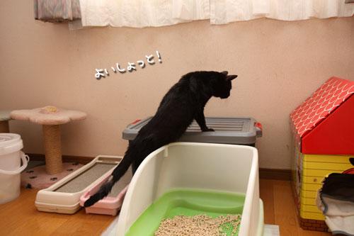 未知数の猫_d0355333_12461529.jpg