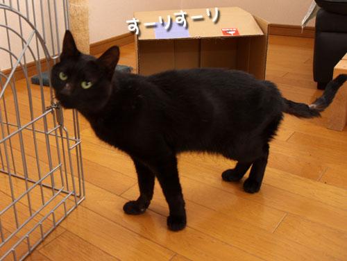 未知数の猫_d0355333_12461545.jpg