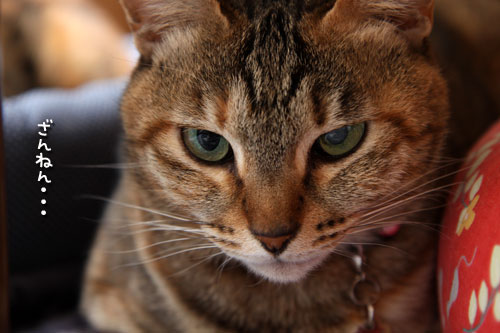 未知数の猫_d0355333_12461608.jpg