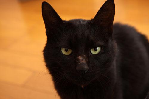 未知数の猫_d0355333_12461647.jpg