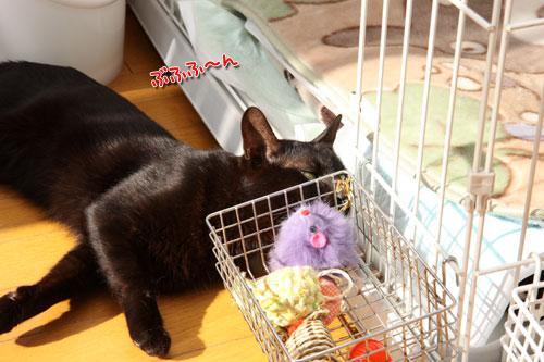 太陽に愛された猫_d0355333_12462814.jpg