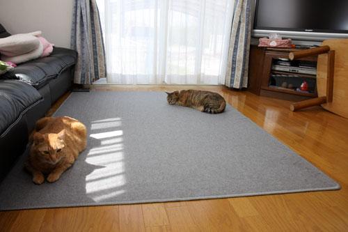 猫にとっての快適って?_d0355333_12482014.jpg
