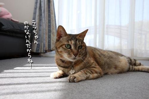 猫にとっての快適って?_d0355333_12482042.jpg