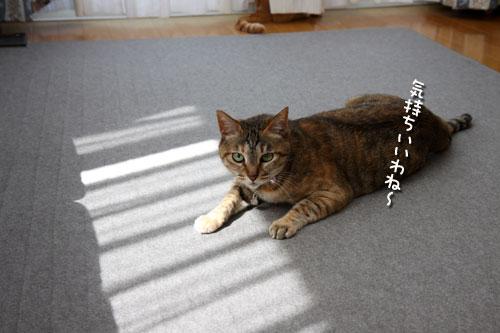 猫にとっての快適って?_d0355333_12482045.jpg