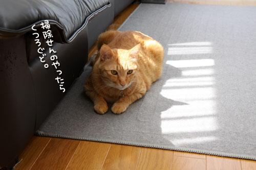 猫にとっての快適って?_d0355333_12482053.jpg