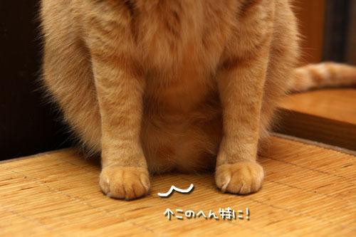 猫萌えポイント_d0355333_12483905.jpg