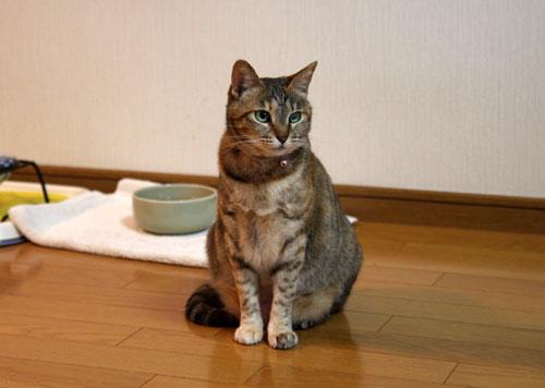 猫萌えポイント_d0355333_12483960.jpg
