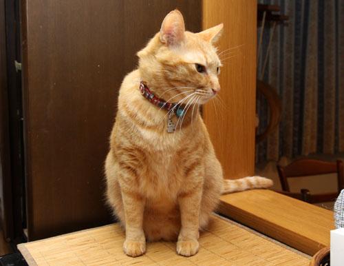 猫萌えポイント_d0355333_12483992.jpg