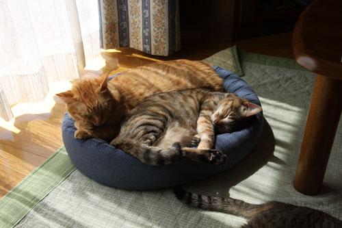猫たちがくれた、勇気。_d0355333_12492474.jpg
