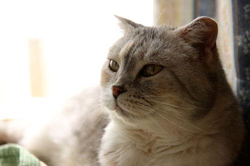 猫たちがくれた、勇気。_d0355333_12492502.jpg