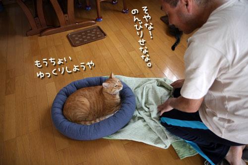 やる気をそぐ猫_d0355333_12492712.jpg