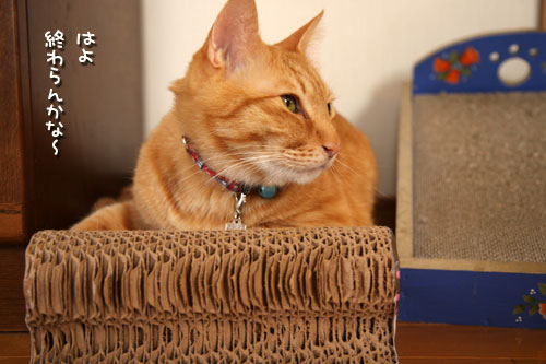 動く猫ベッドと動かないちゃとらん_d0355333_12492876.jpg