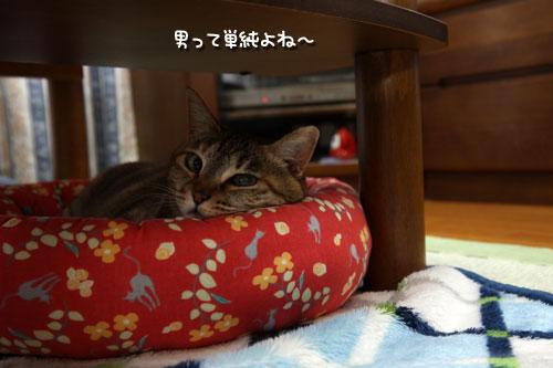 動く猫ベッドと動かないちゃとらん_d0355333_12492976.jpg