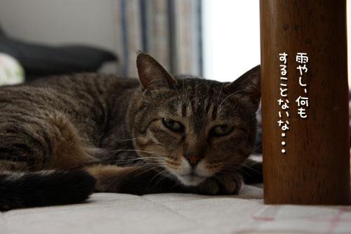 雨の日の猫は、とことん・・・_d0355333_12495388.jpg