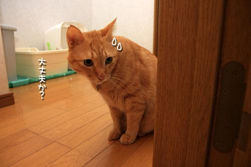 仔猫なら、と思ったけど_d0355333_12534936.jpg
