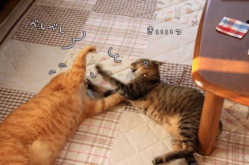 猫バトルふたたび_d0355333_14551003.jpg