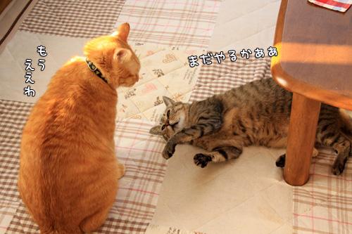 猫バトルふたたび_d0355333_14551009.jpg