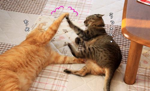 猫バトルふたたび_d0355333_14551030.jpg