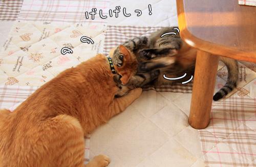 猫バトルふたたび_d0355333_14551031.jpg