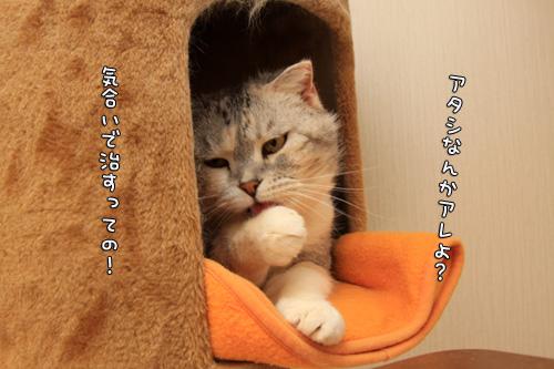 ほ~~っ・・・!_d0355333_14565200.jpg