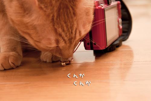猫毛フェルトやってみました_d0355333_14575644.jpg